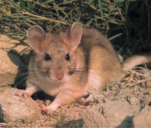 Pack Rats Kathy S Chronicles