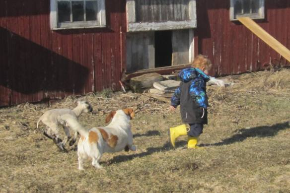 "A child shall lead them: Spot and our other ""dog,"" Lamby, following their buddy."