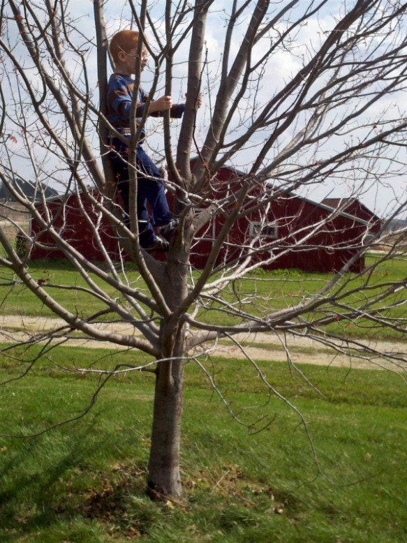 "March 2012: Tree climbing weather, no jacket required.  Our son climbed ""Maple the Maple"" for the first time at our new house."
