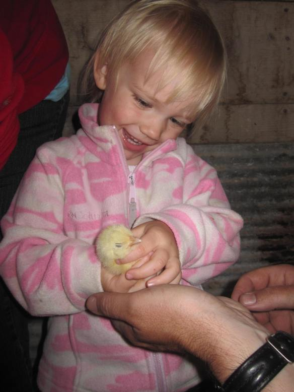 Mike reaching out his hands to help my excited daughter hold a broiler chick.