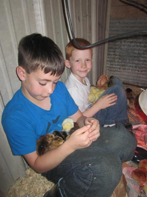 My nephew and son each snuggle a pile of chicks on their laps.